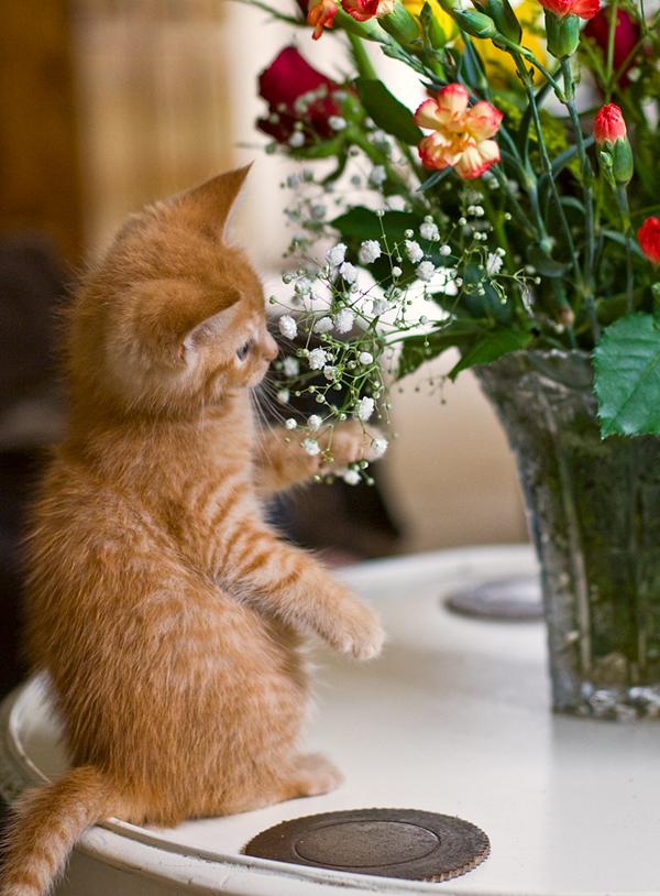 a floral puss